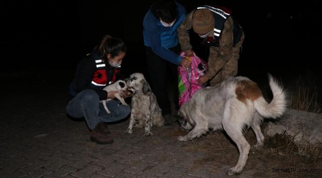 Mehmetçik sokak hayvanlarının yanında