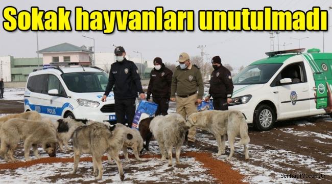Kars'ta sokak hayvanları unutulmadı