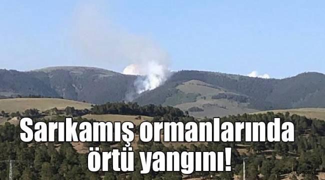 Sarıkamış ormanlarında örtü yangını!